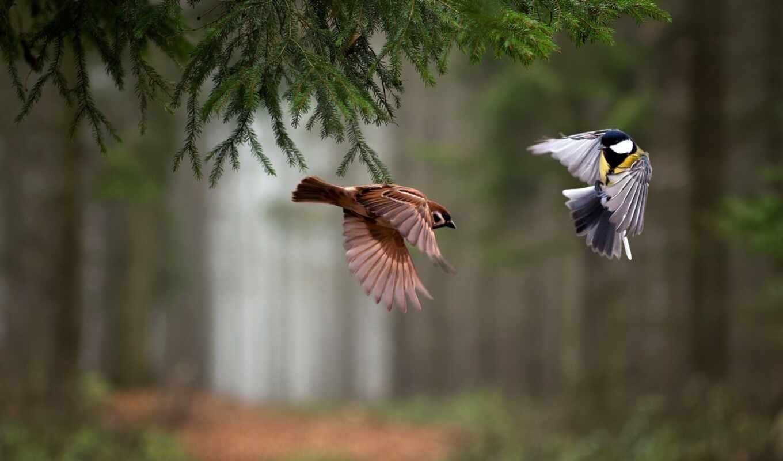 лес, птица