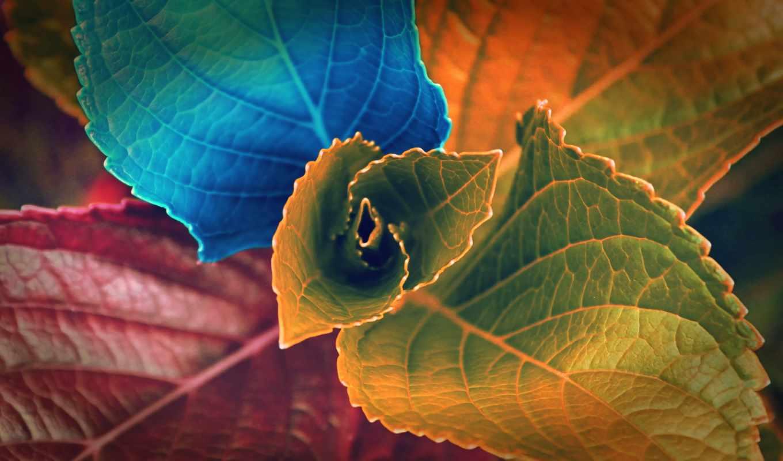 ,листья,colorful,