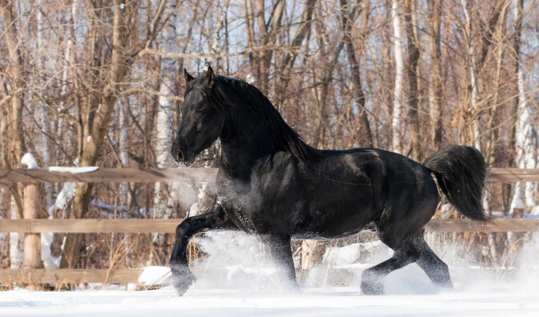 лошади, winter, снег, животные, картинка, коллекция,