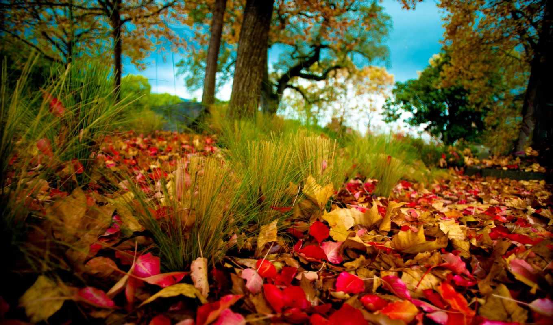 осень, листва, деревья, природа,