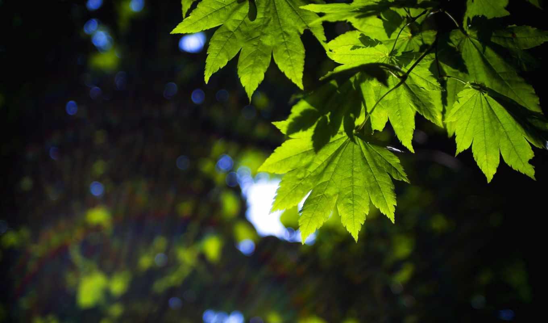 widescreen, фон, широкоформатные, полноэкранные, листья, широкоэкранные, makro, fullscreen,