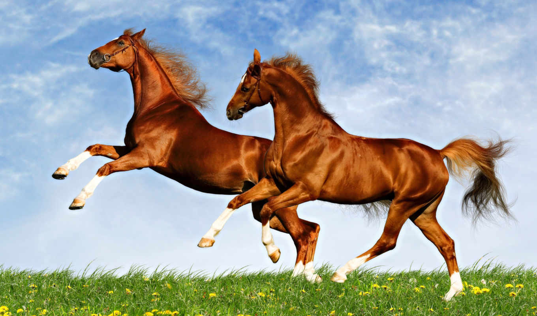 ddgroup, windows, professional, rus, программы, версия, лошади, коні,