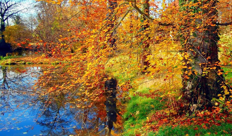 осень, природа, деревья, листья, времена, года, трава,