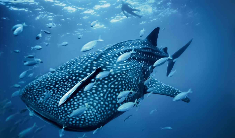 her, time, unknown, science, акула, китовая, долгое, встречали, моряки, оставалась,