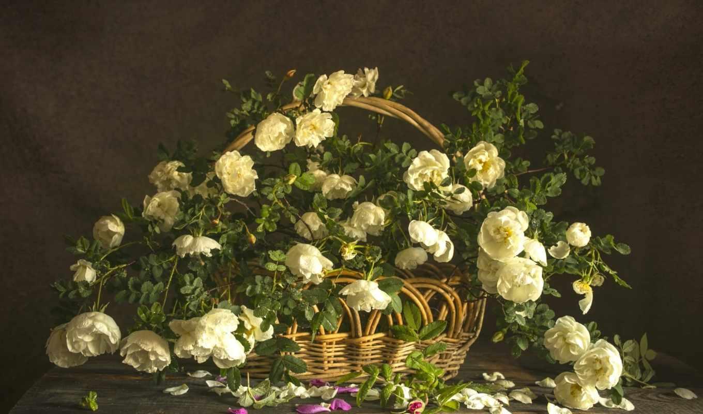 kwiaty, zdjęcia, gif, zdjecia, tapety, kwiatki, czerwone, kwiat,