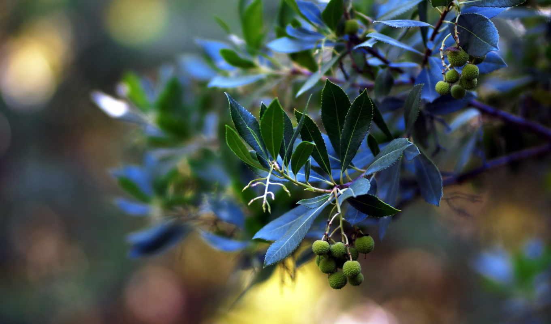 white, зелёный, трава, года, листва, cvety, растения, радуют, пору, любую,