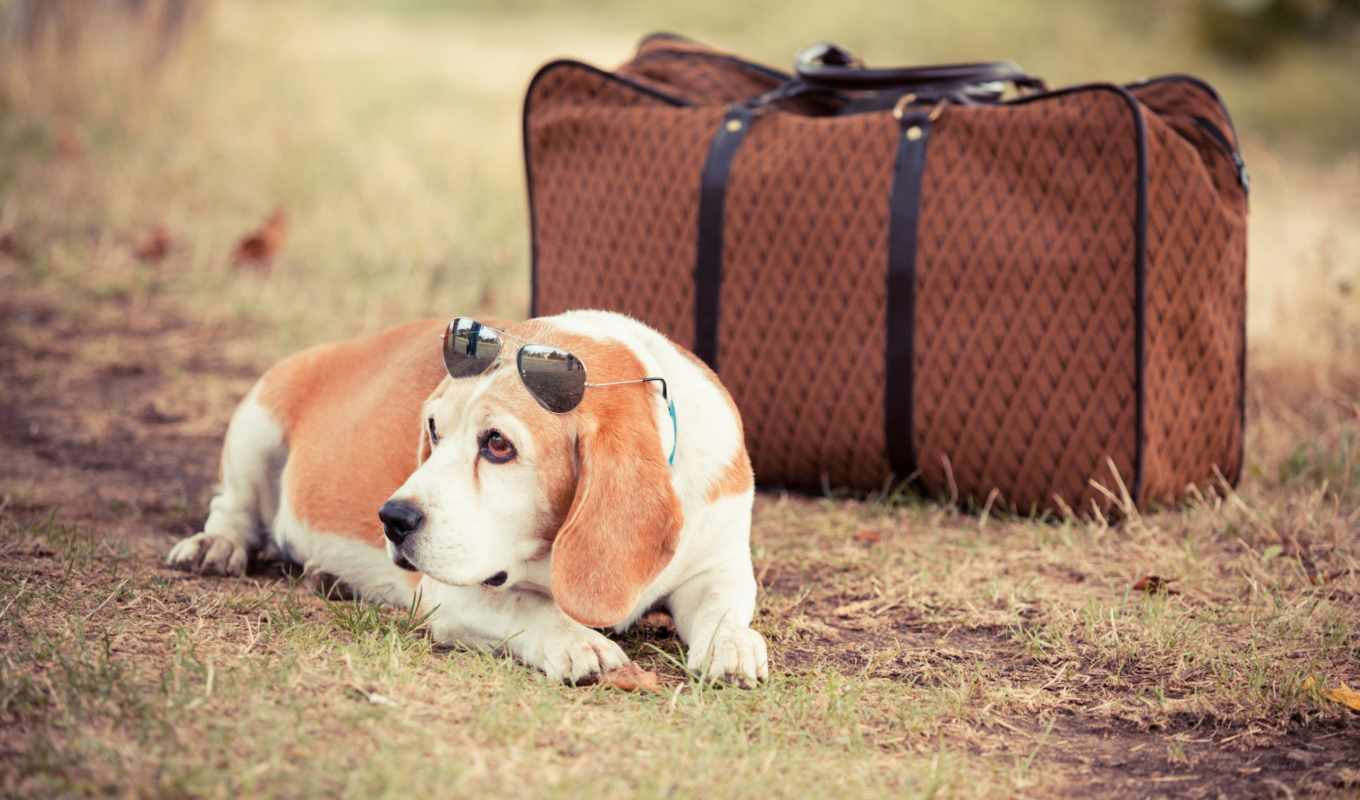 dog, travel, with, you, summer, about, ukraine, this,