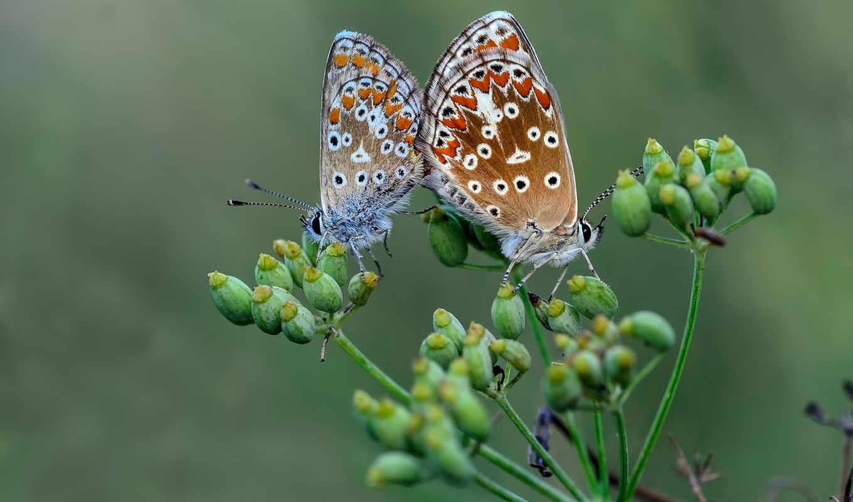 любов, love, priroda, zhivotnye, красавица, разные, природа, preview,