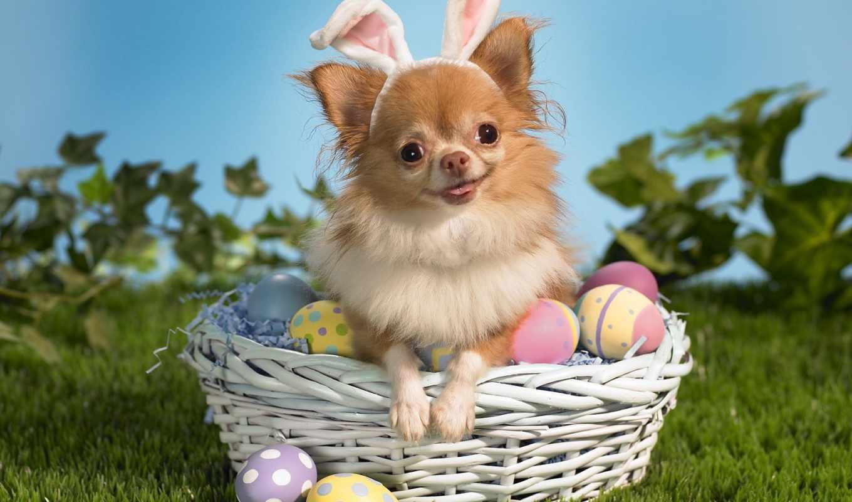 easter, яйца, собака, праздник, пасхальные,
