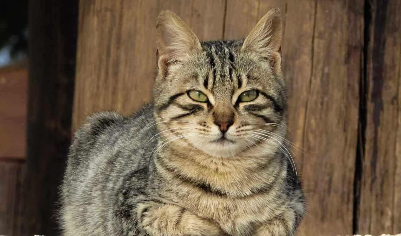 кот, free, cute, animal, животные, whiskers, fauna,