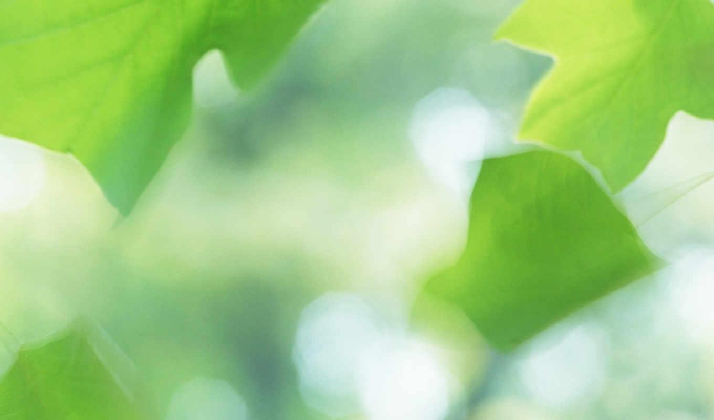 green, макро, лист, зеленые, лето, листочки,