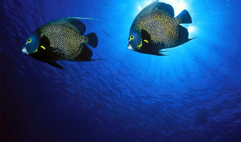 color, ocean, blue, underwater, more, this,