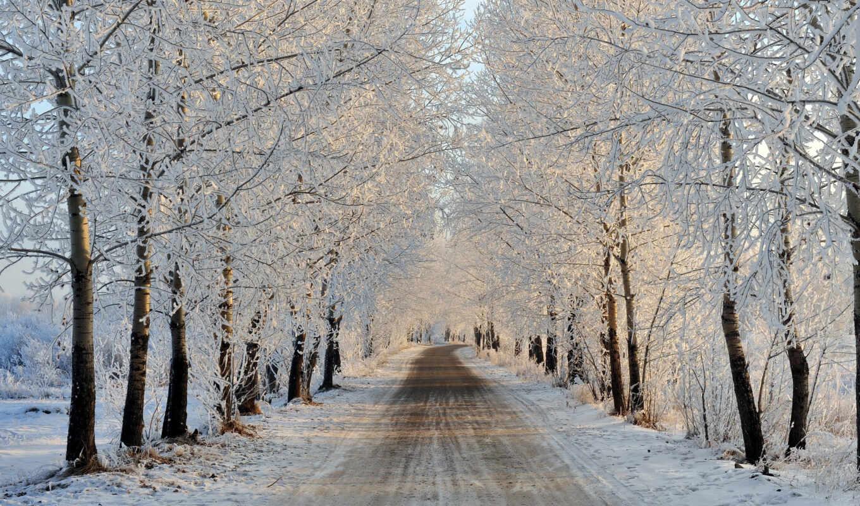 winter, снег, дерево, природа, дорогой, sun, landscape, добавить, free, kartinika, natural