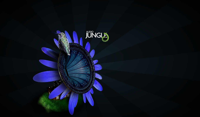 музыка, jungle, audio, арт, птичка, цветок, животные,