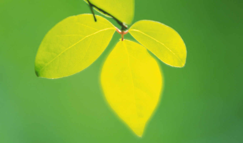leaves, green, nature, macro, depth, field, plants, tree,