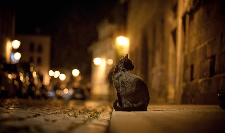 кошка, черная, город, ночь, улица, огни,