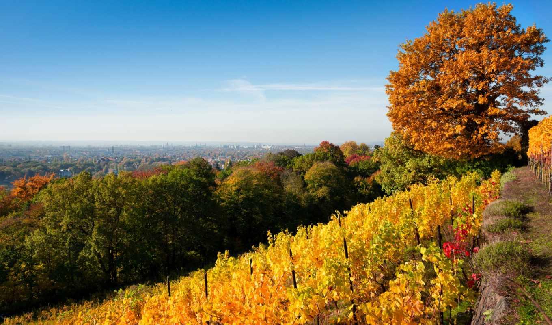 осень, vineyard, пейзажи, деревья, природа, пейзаж, resolution, download, листва, холм, description, above, choose,