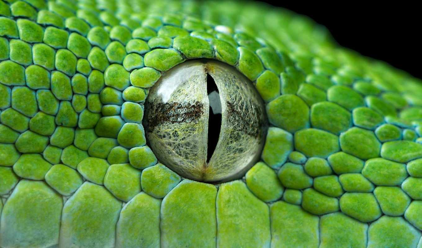 глаз, snake, vind, henrik, closeup, eyes, nikon, you,