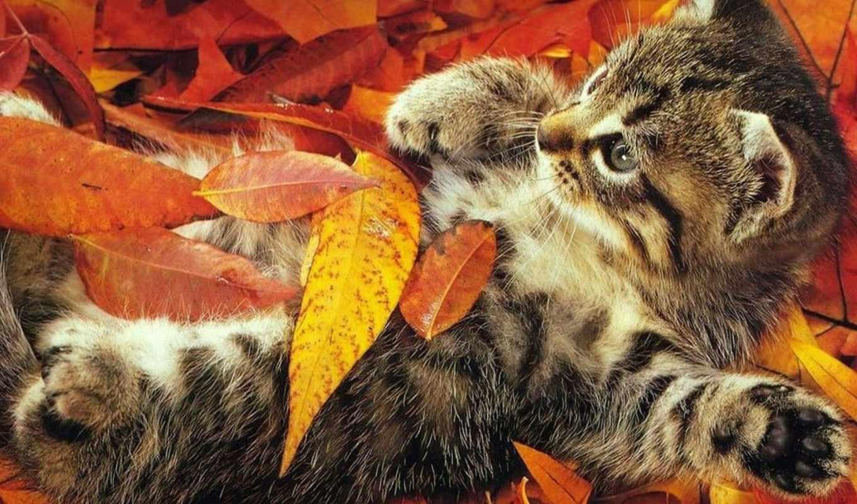 osen, кошка, кошки, осени, тихой, серое, рыжая, мягких, лапах,,