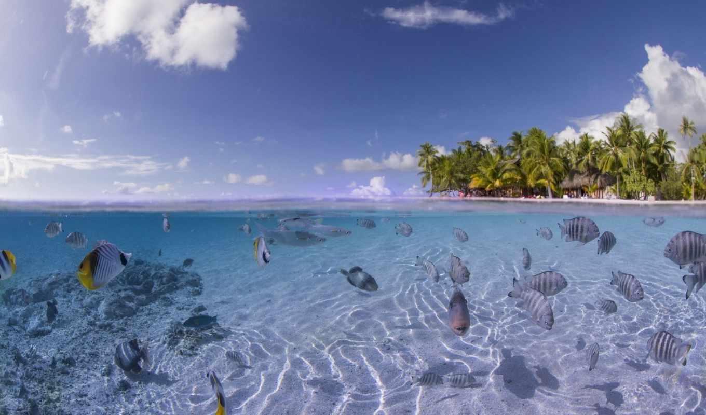 море, fish, ocean, out, check, them, планшетный,