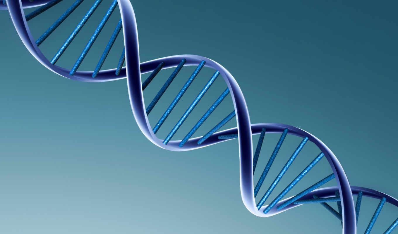 человека, геном, генов, марта,