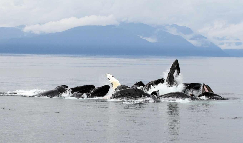 киты, высоком, качестве, горы, ocean, дневник,