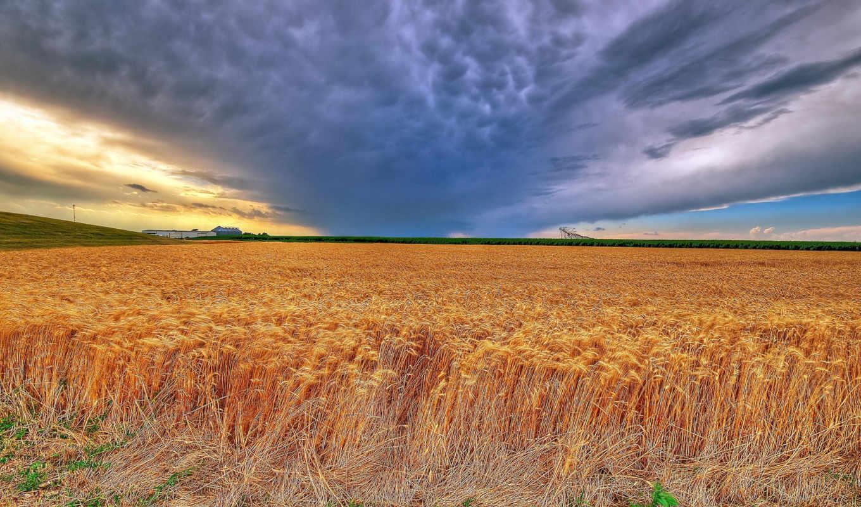 kansas, пшеница, summer, буря, late, jameswatkins, поля, flickr,
