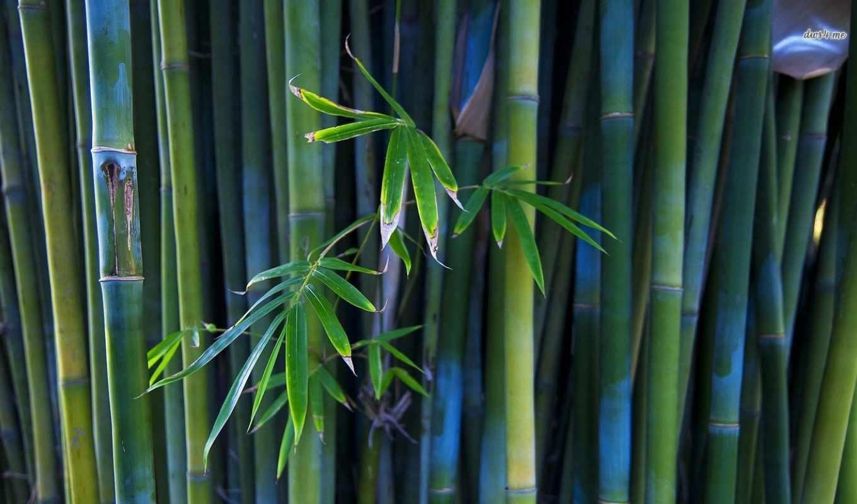 природа, широкоформатные, красивые, бамбук, листьями,