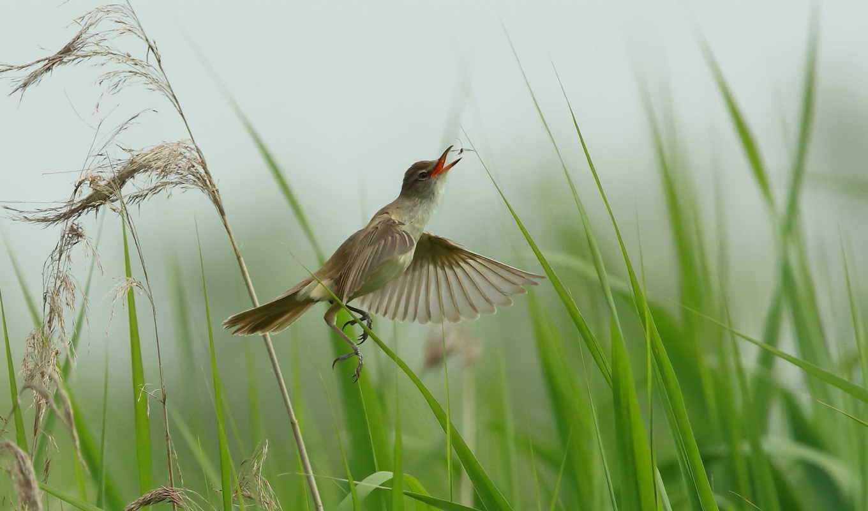 телефон, mobile, птица, насекомые, hunting, страница, трава, львица, ipad,