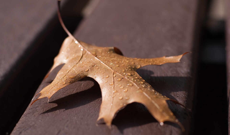 лист, осенний, росы, разное, капельки, эротику, показывать,