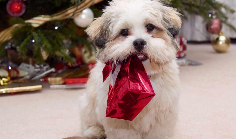 новый, год, gift, holiday, собака, christmas, celebration, подарки, puppy, елка, present, животные, season,