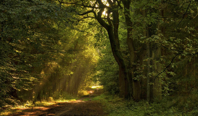 priroda, les, тропинка, деревя, дорога,