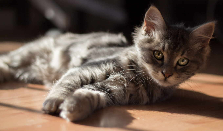 котенок, изображение,