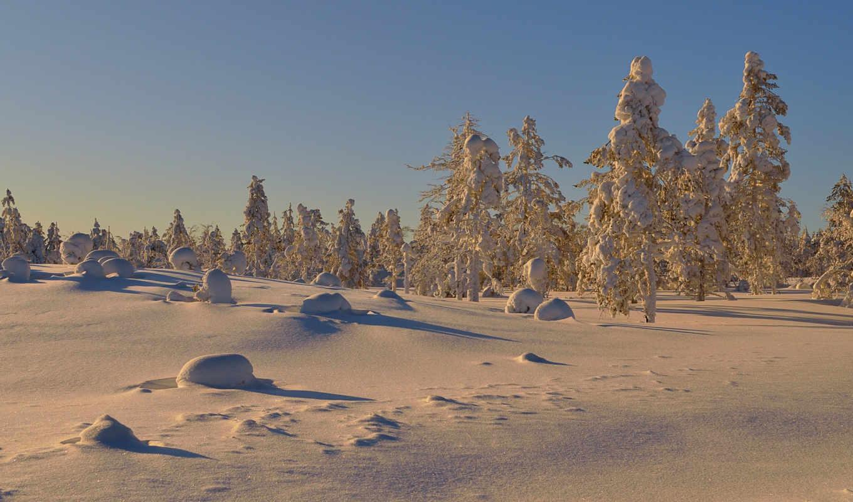 солнечный, den, zima, снег, деревя,