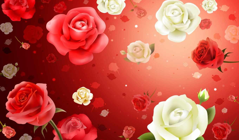 цветы, розы,