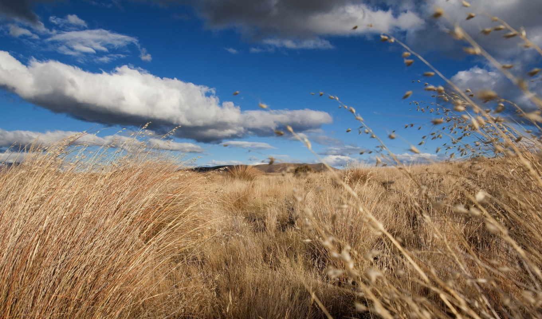природа, трава, небо, landscape, pantalla, free, fondos,