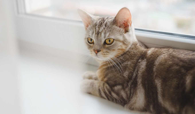кот, down, лежать, premium, getty, фото, ложь, foto