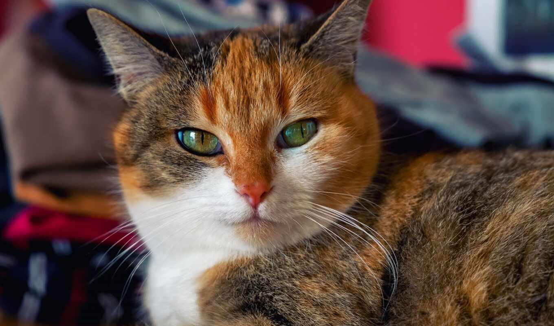 зелёный, глаз, кот, russian