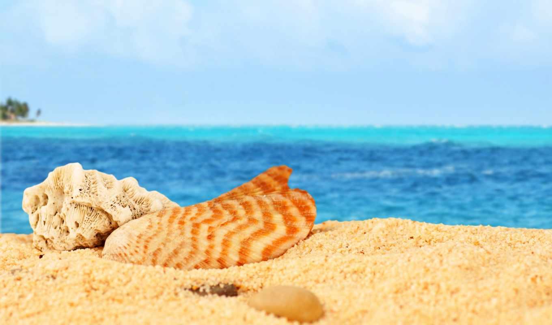 пляж, море, sun, ntl, ракушки, оптом, песок, feat, canvas, пляже,