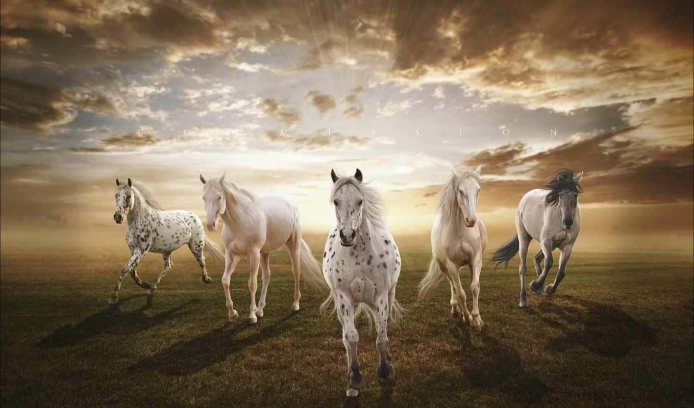 закат, поле, лошади, landscape, природа, zhivotnye, нравится,