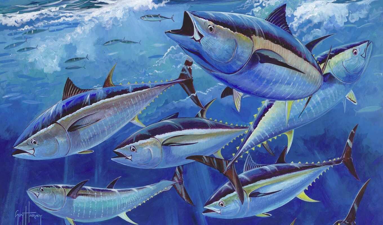 парень, tuna, hаrvey, amaze, атлантический, yellowfin, bluefin