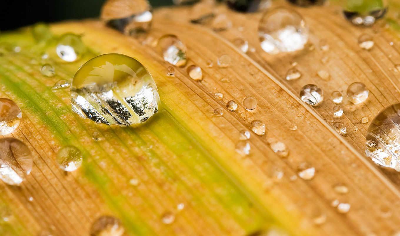 капли, лист, роса, макро, water, download, hintergrundbilder, смотрите, autumn,