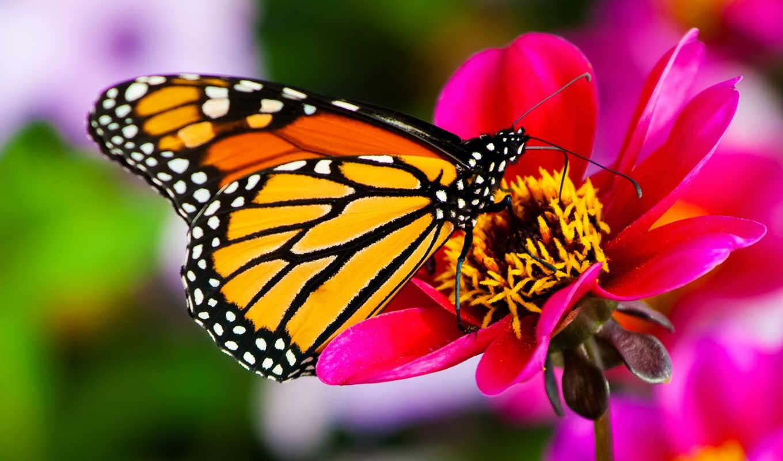 бабочки, бабочек, тропических, выставка, живые, живых, tropical, тайны, океана, garden, скидка,