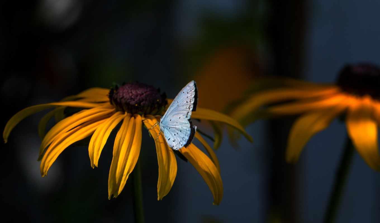 бабочка, природа, изображение, flowers,