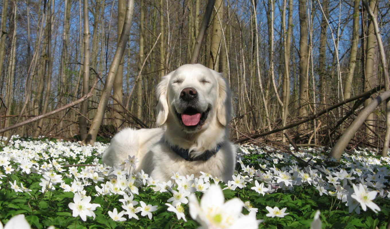 природа, весна, собака, цветы,
