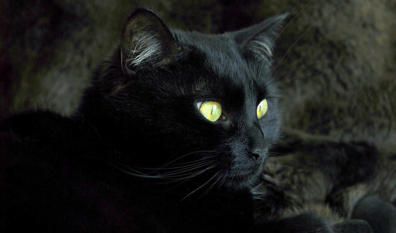 кот, black, animal, черная, котенок