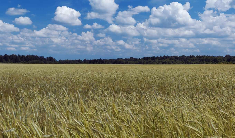 ,небо,урожай,поле,лес,