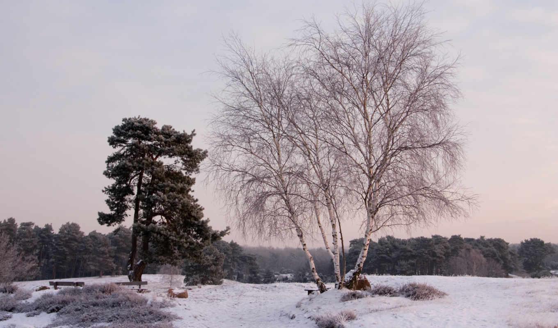 деревья, пейзаж, снег, зима, картинка, картинку,