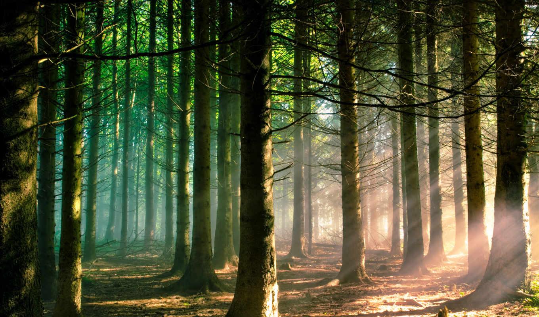 лес, природа, свет, картинка, картинку, разрешением, правой, кнопкой, мыши, выберите, ней, save, скачивания,