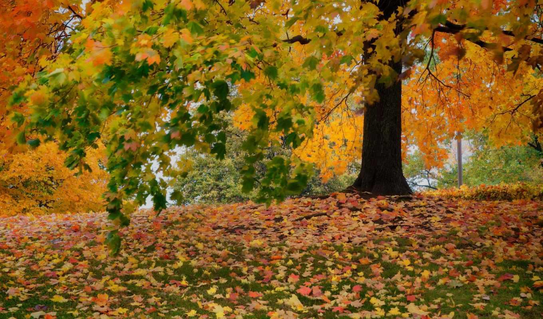 осень, деревья, листва, сайте, нашем,